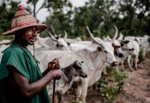 Farmers-herders clash